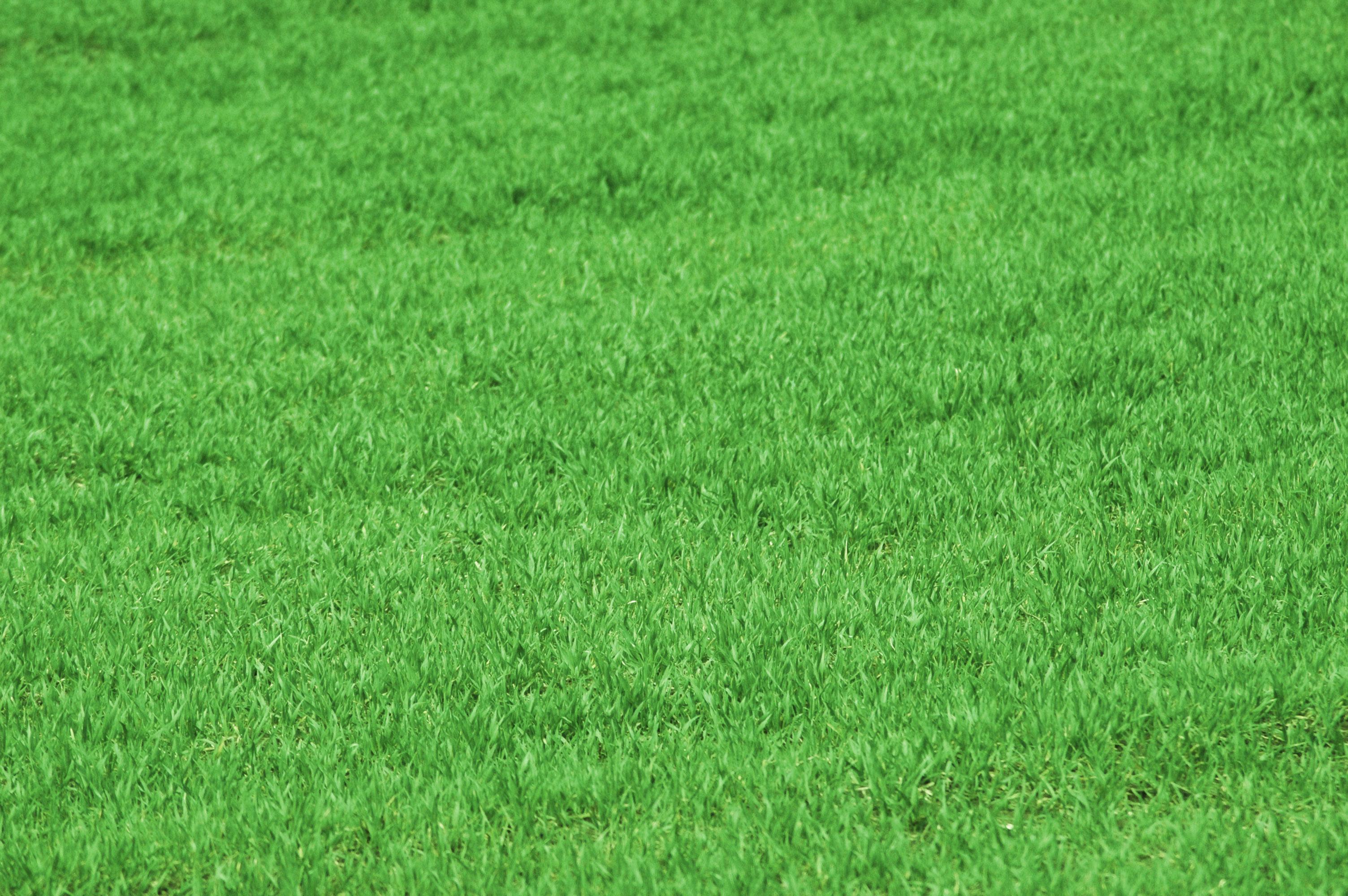 Lawn fertilization michigan greens keeper inc for Garden grass